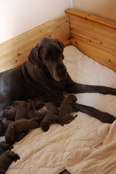 Xara and 3 days old puppies